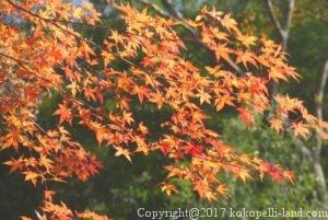 月待の滝の紅葉