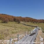 信州トレッキングコース/高峰高原・池の平湿原をハイキング
