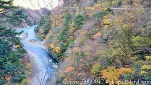 橋からの紅葉