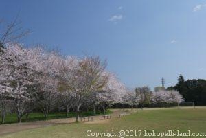 天神山公園の桜