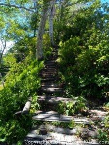 栂池急な階段