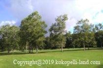 桜ヶ丘森林公園キャンプ場