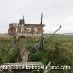 北海道車中泊の旅8日目|霧多布岬・納沙布岬・野付半島トドワラ&ナラワラ